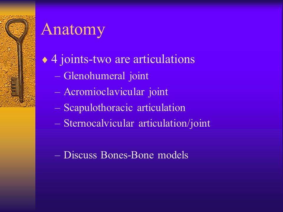 Anatomy 4 joints-two are articulations Glenohumeral joint