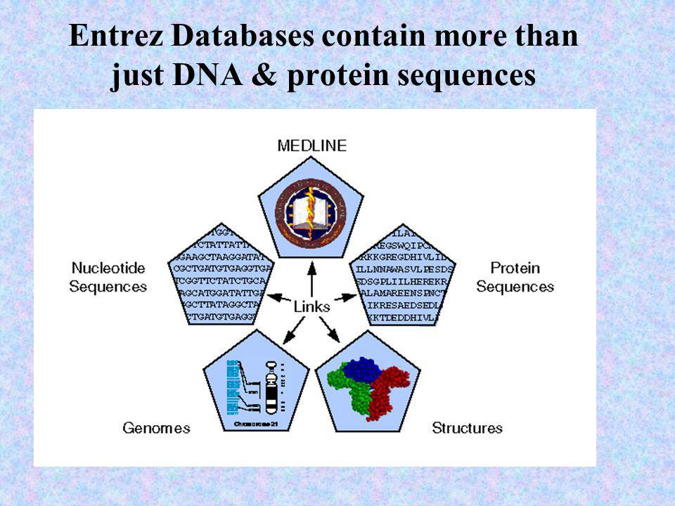 Entrez Databases contain more than just DNA & protein sequences