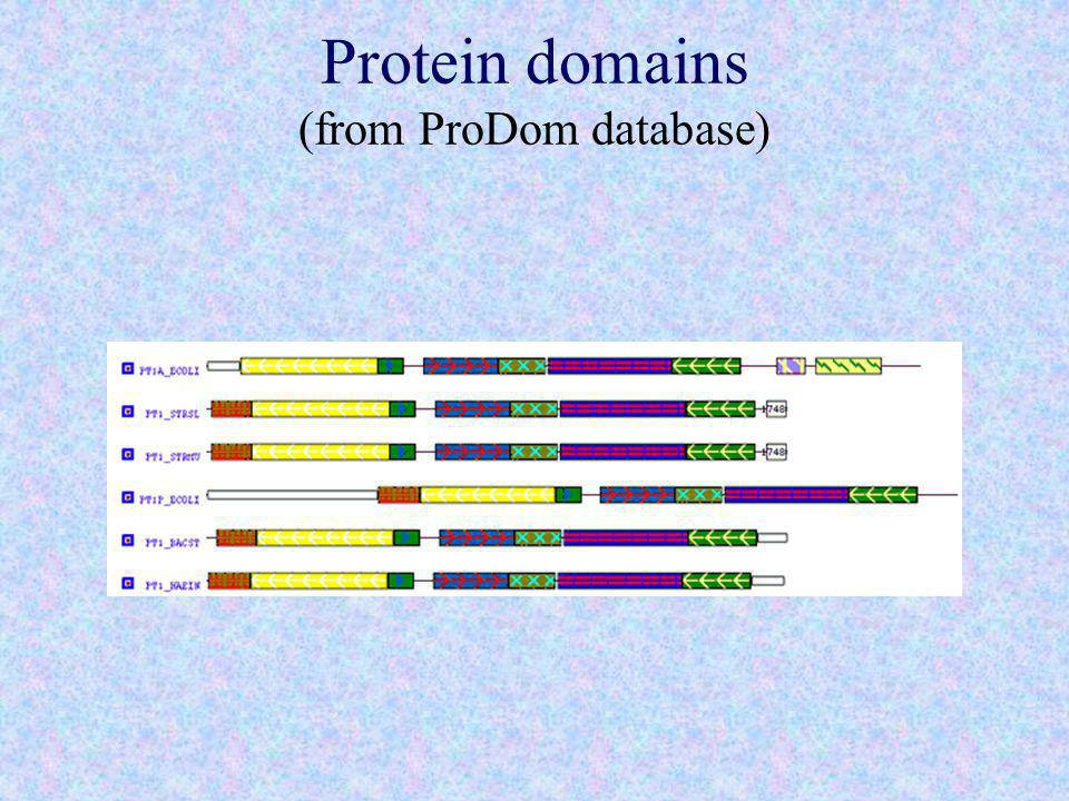 Protein domains (from ProDom database)