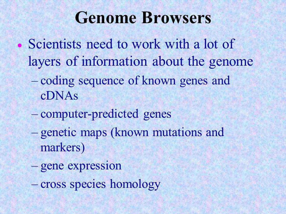 Genome Browsers Scientists need to work with a lot of layers of information about the genome. coding sequence of known genes and cDNAs.