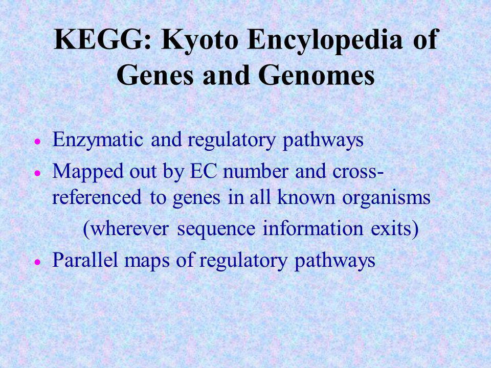 KEGG: Kyoto Encylopedia of Genes and Genomes