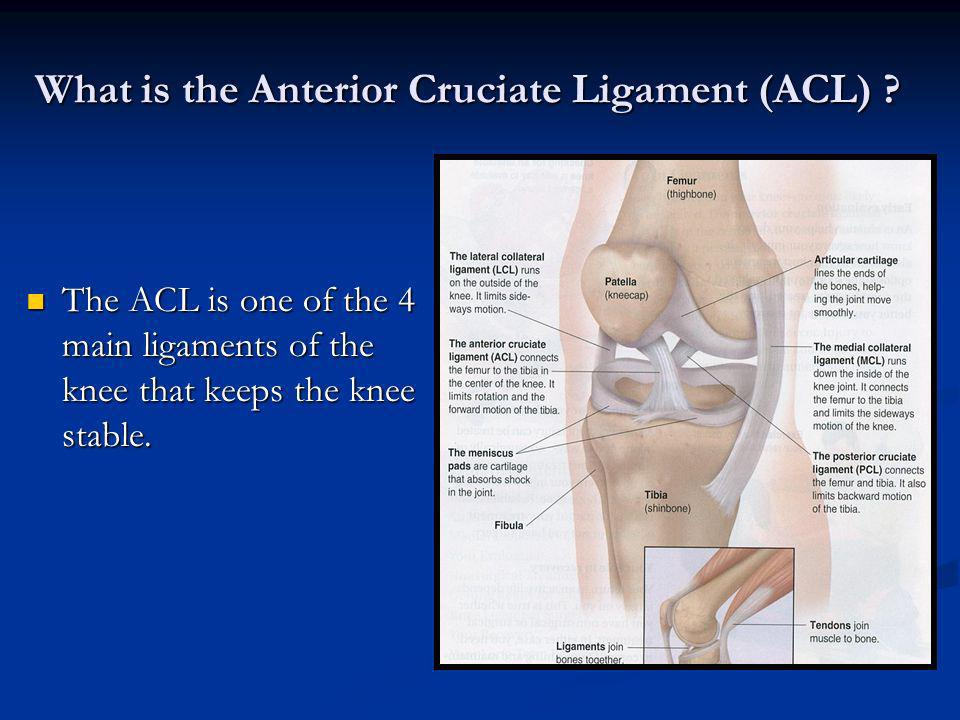 the cause and effect of anterior cruciate ligament injuries The anterior cruciate ligament (acl) is one of four ligaments that help stabilize the knee it is the most commonly injured knee ligament it is the most commonly injured knee ligament acl injury usually occurs when the knee is hyperextended (straightened) and a pivot occurs simultaneously the injury may occur with or without contact.