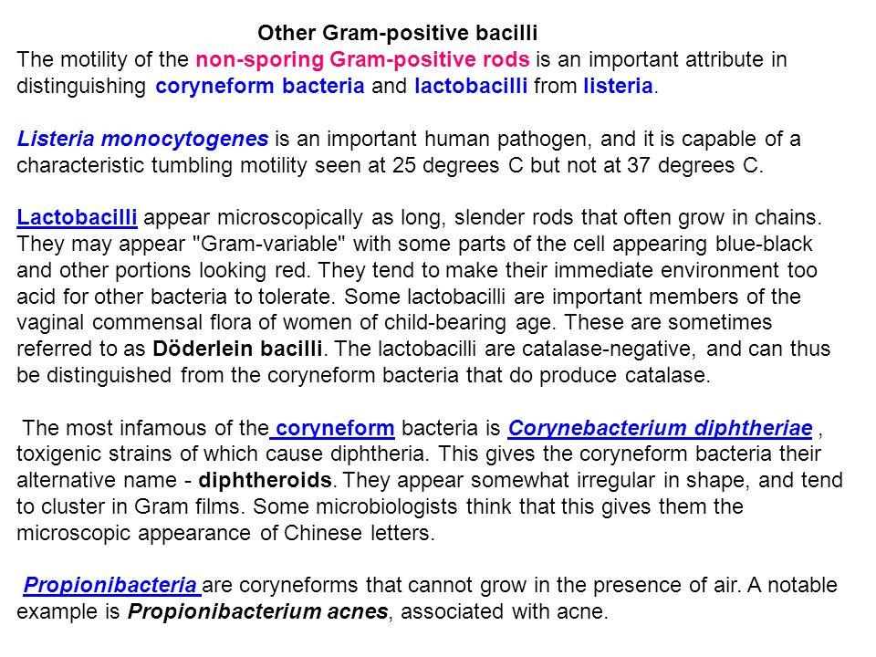 Other Gram-positive bacilli