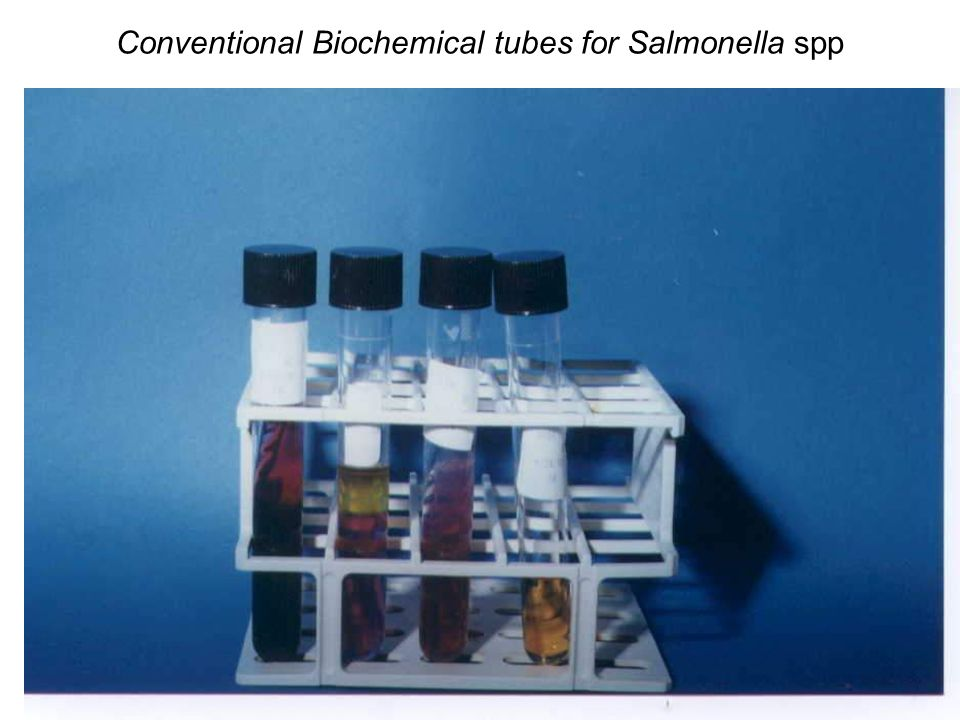 Conventional Biochemical tubes for Salmonella spp