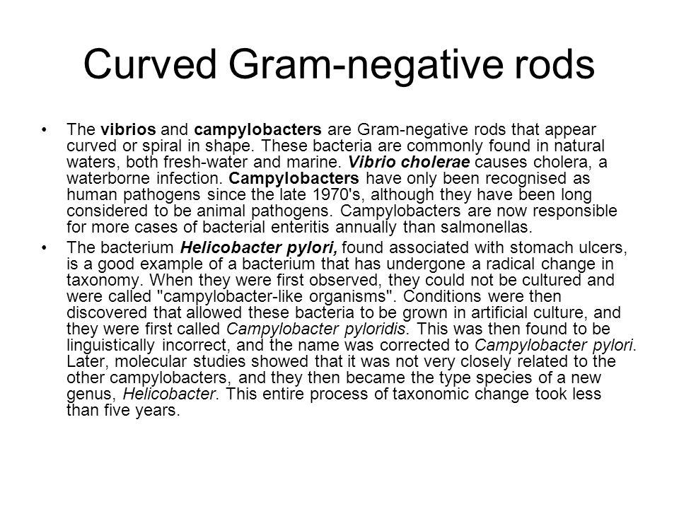 Curved Gram-negative rods