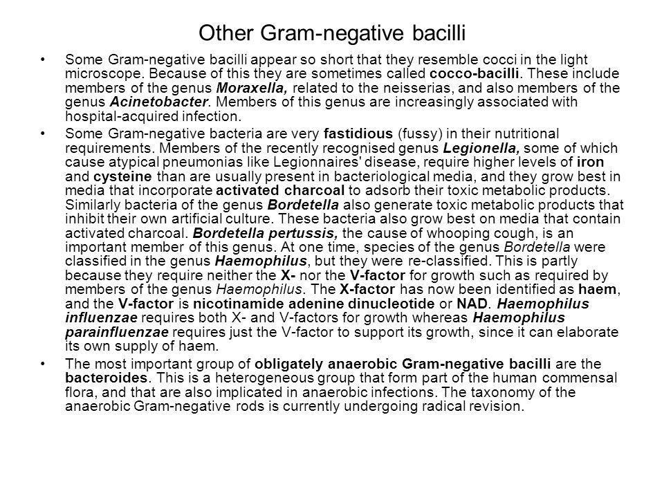 Other Gram-negative bacilli