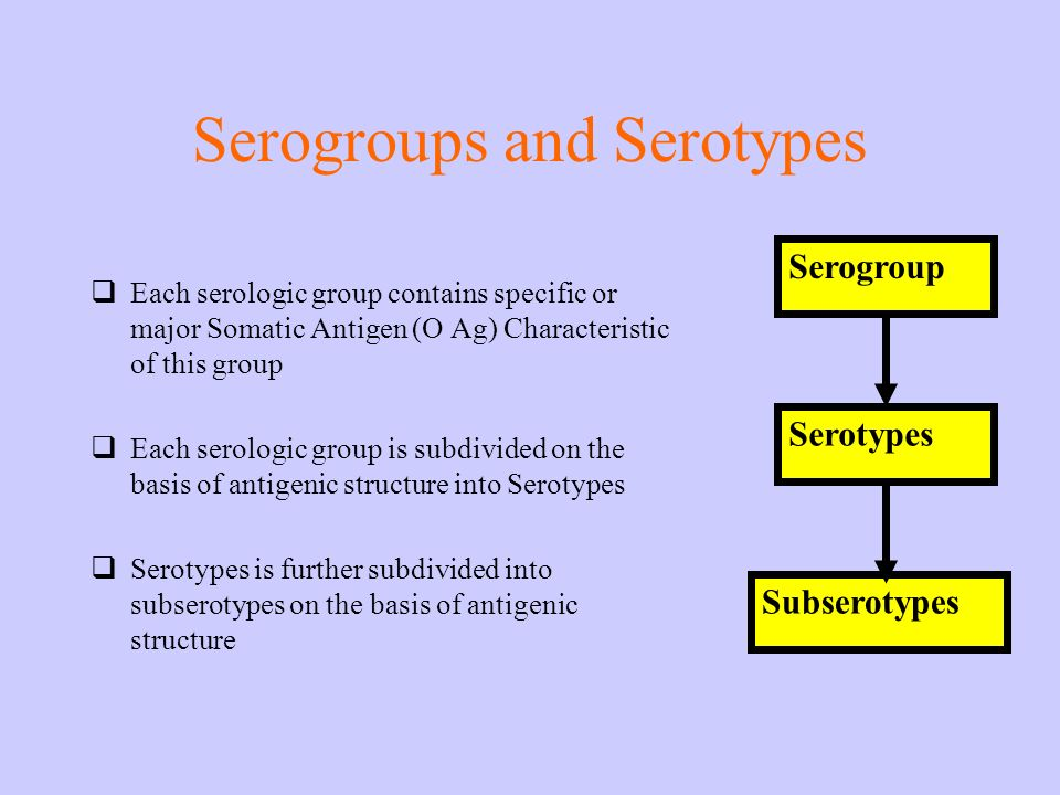 Serogroups and Serotypes