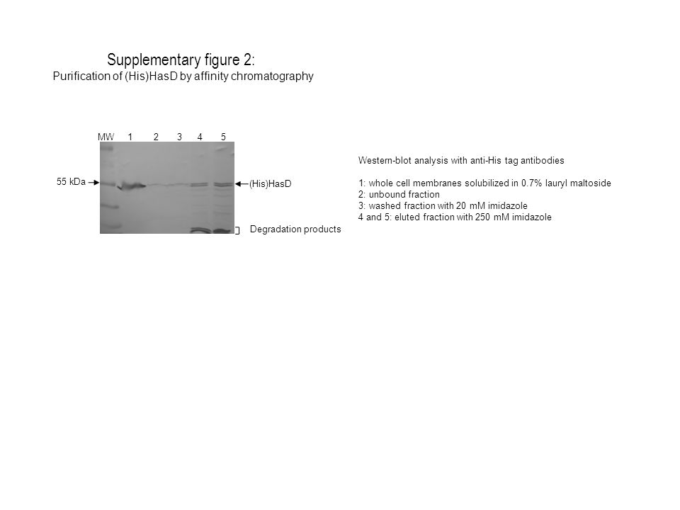 Supplementary figure 2: