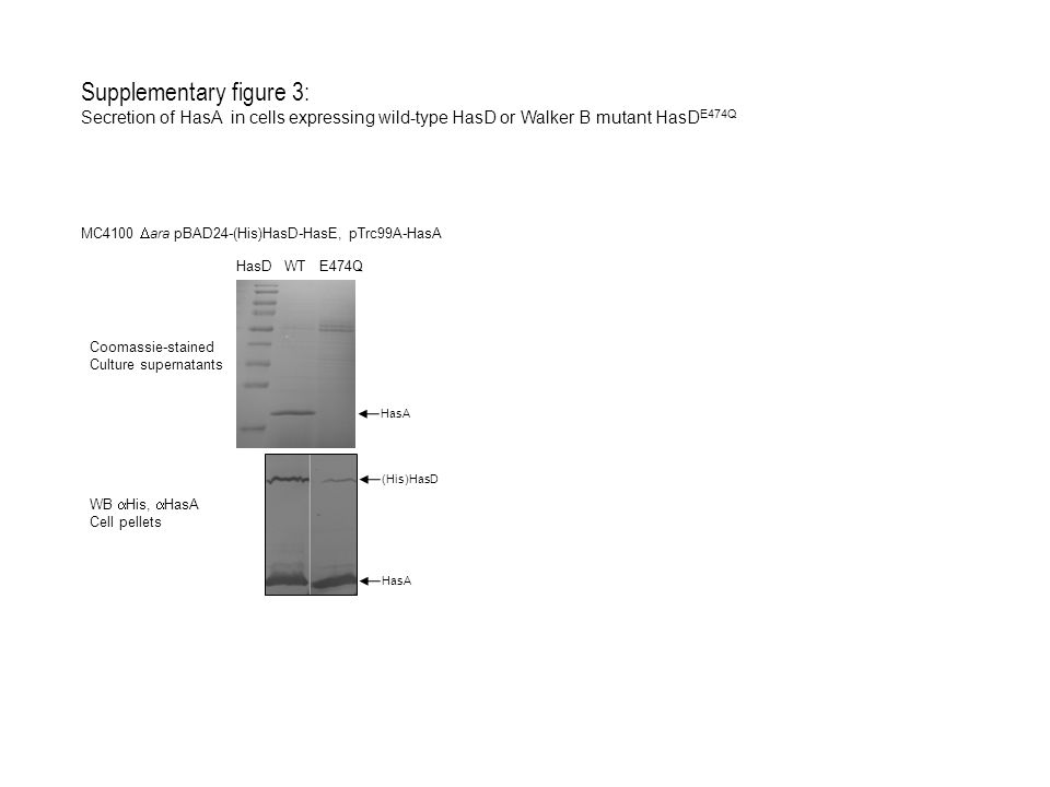 Supplementary figure 3: