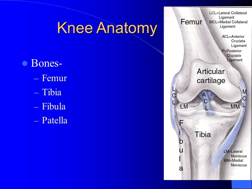 Knee Anatomy Bones- Femur Tibia Fibula Patella