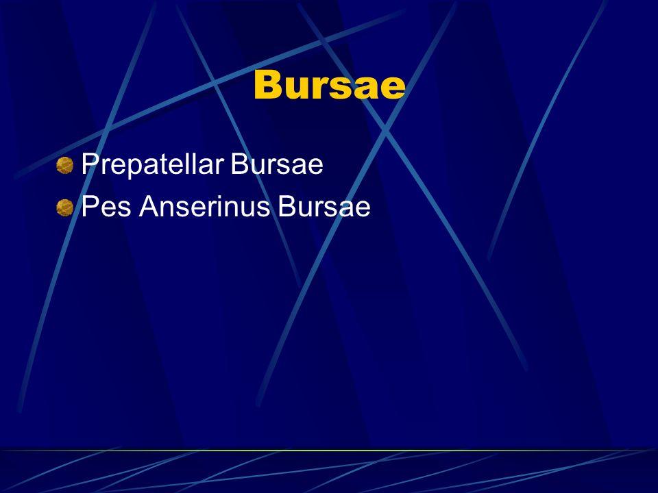 Bursae Prepatellar Bursae Pes Anserinus Bursae