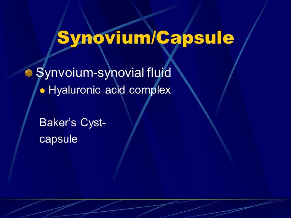 Synovium/Capsule Synvoium-synovial fluid Hyaluronic acid complex