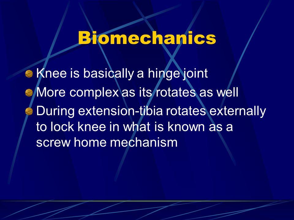 Biomechanics Knee is basically a hinge joint
