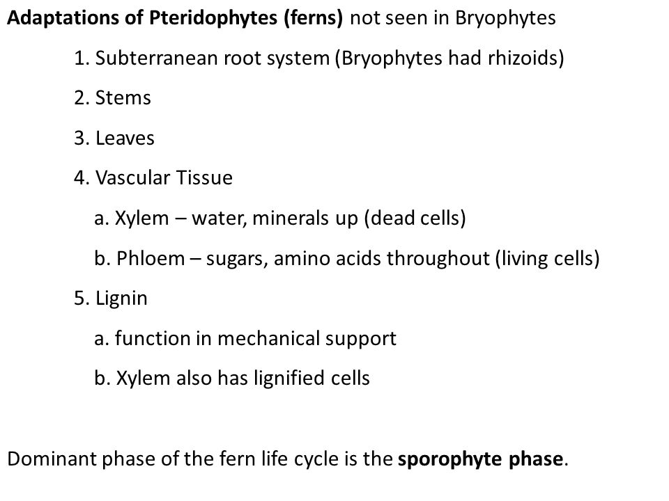 Adaptations of Pteridophytes (ferns) not seen in Bryophytes