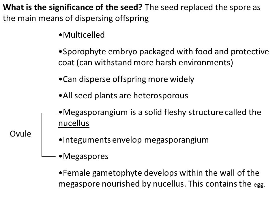 What is the significance of the seed