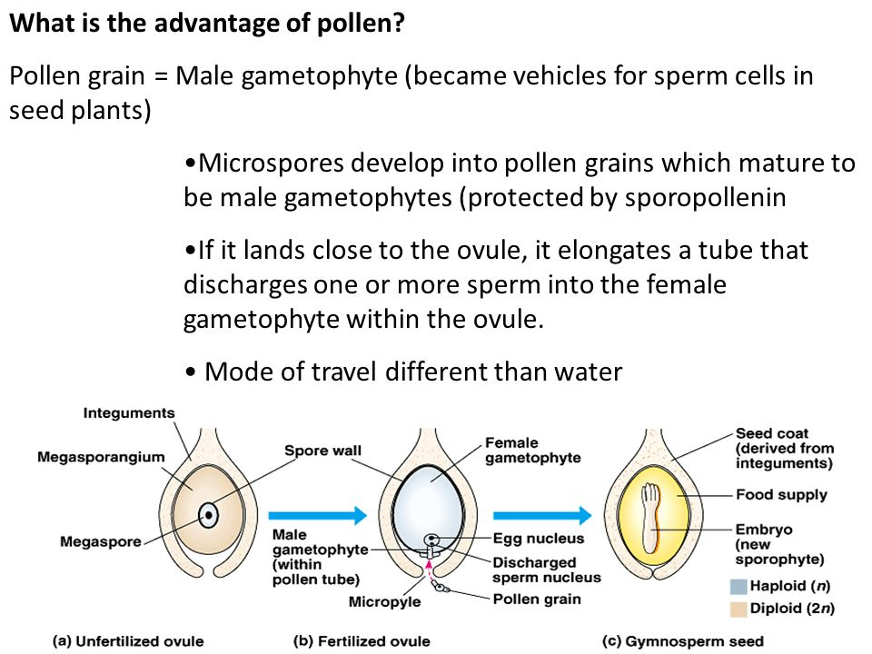 What is the advantage of pollen
