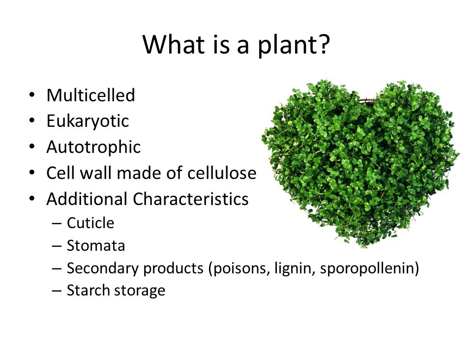 What is a plant Multicelled Eukaryotic Autotrophic
