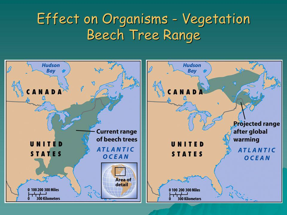 Effect on Organisms - Vegetation Beech Tree Range