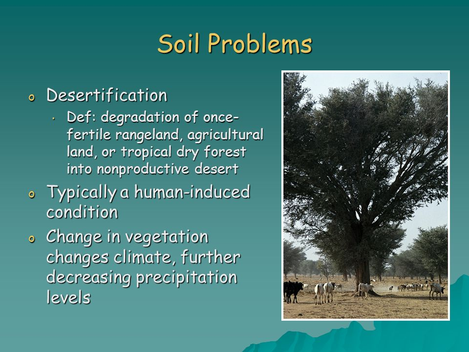Soil Problems Desertification Typically a human-induced condition