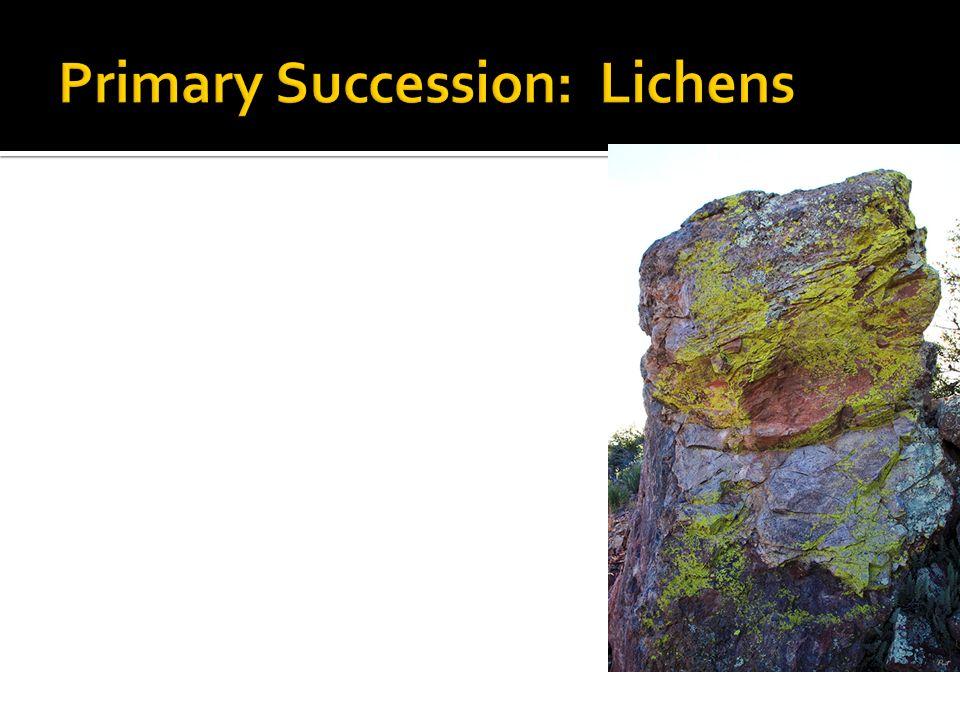Primary Succession: Lichens