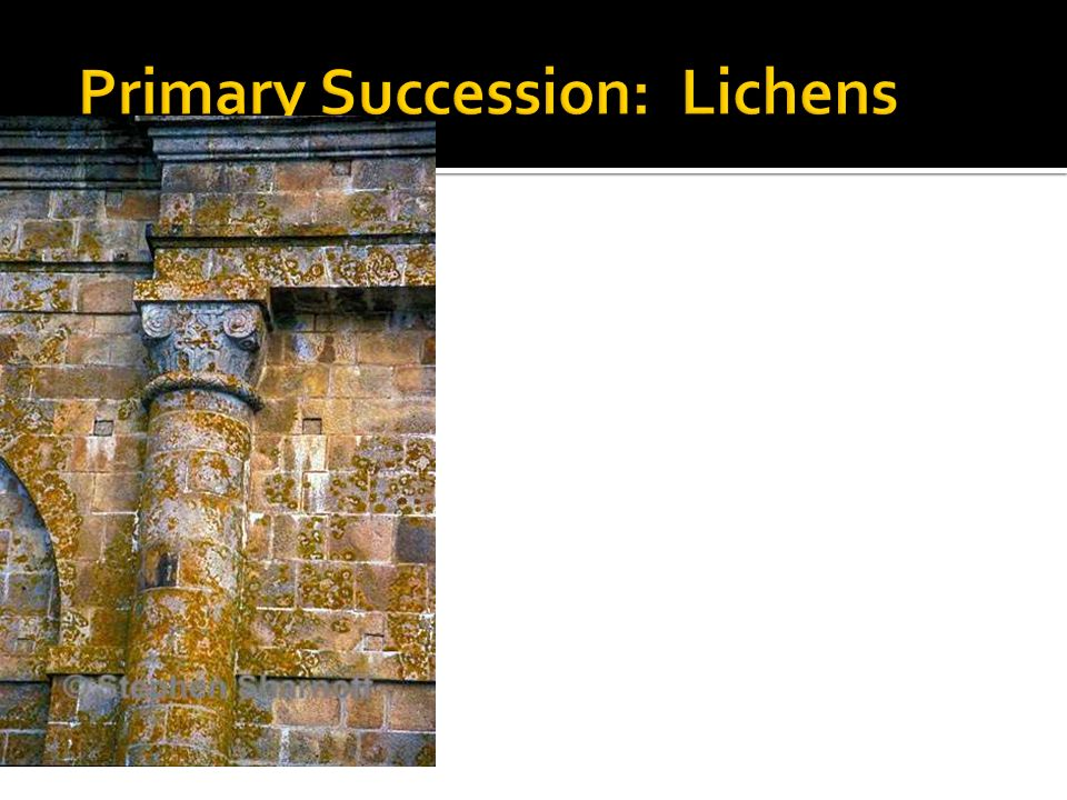 Primary Succession: Lichens