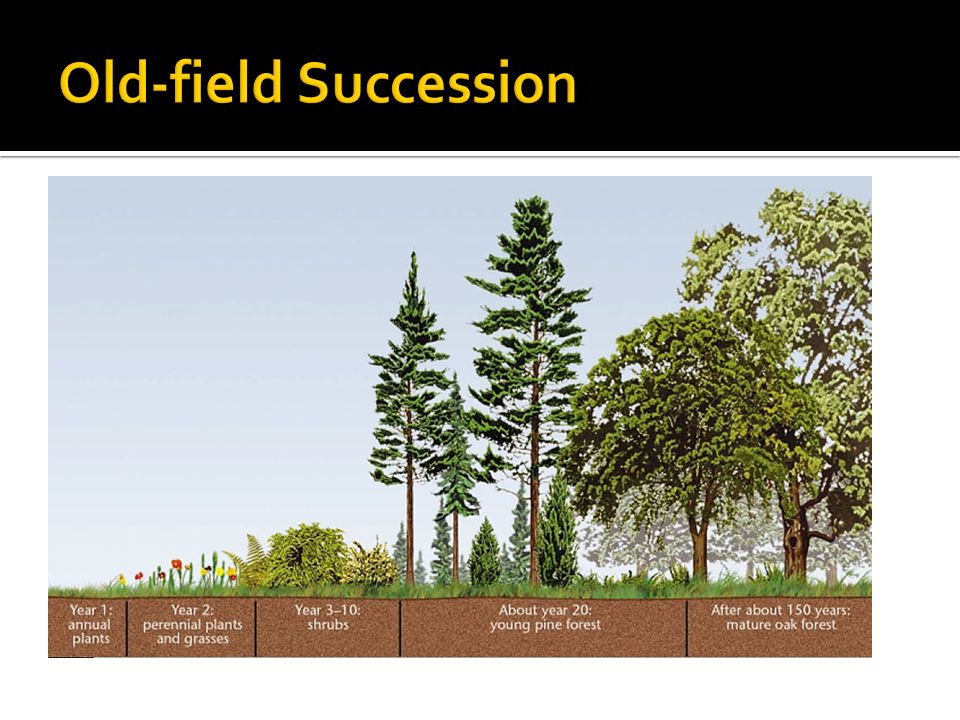 Old-field Succession