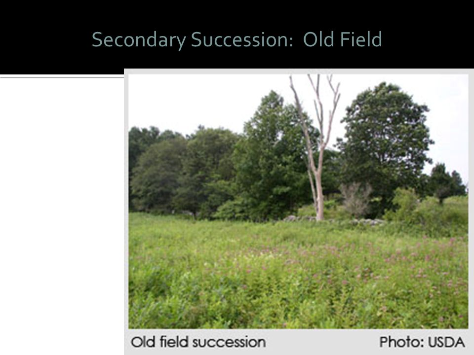 Secondary Succession: Old Field