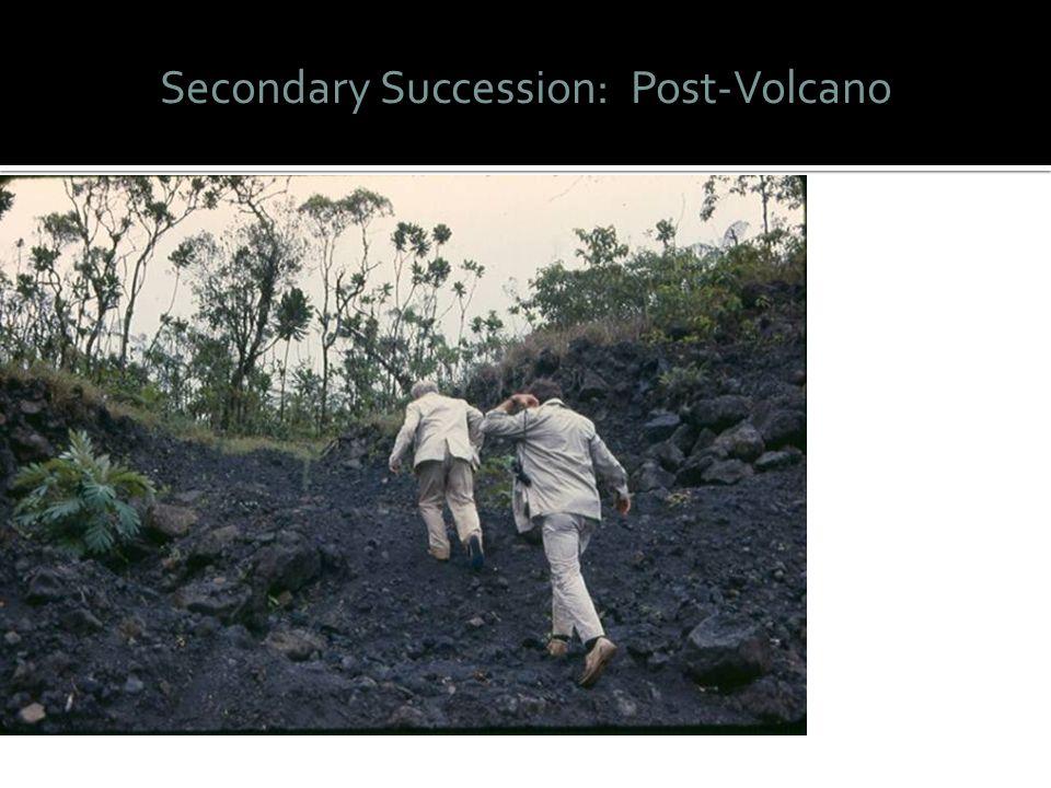 Secondary Succession: Post-Volcano