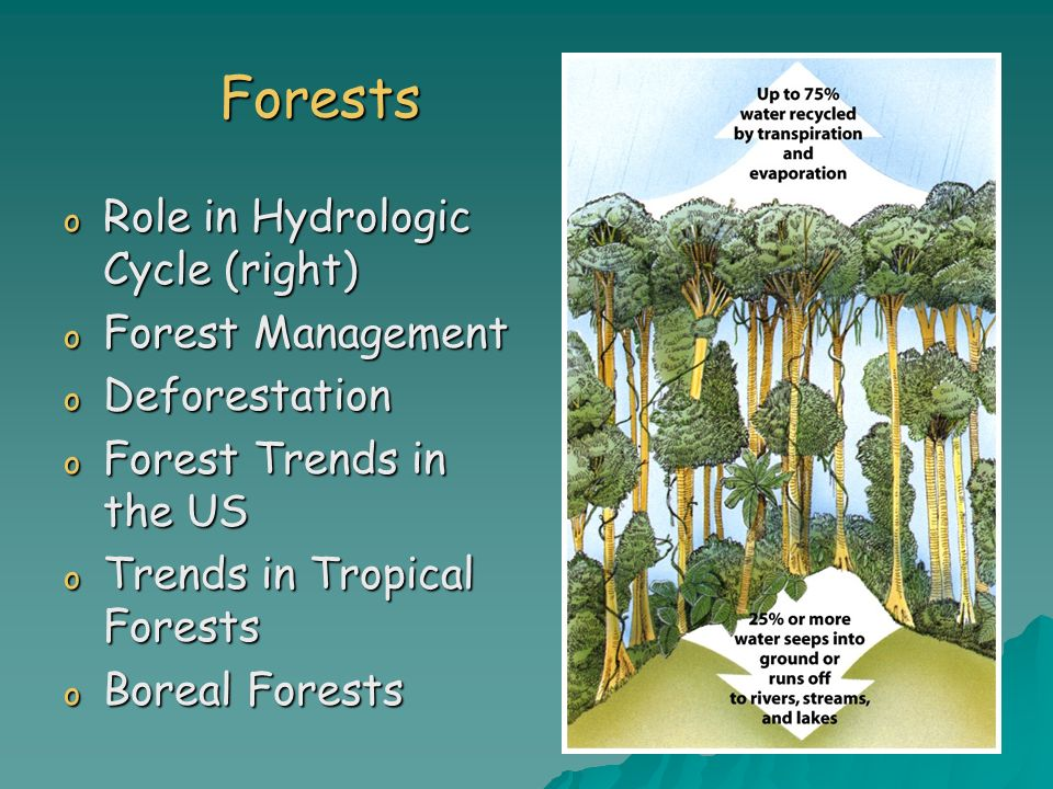 Forests Role in Hydrologic Cycle (right) Forest Management