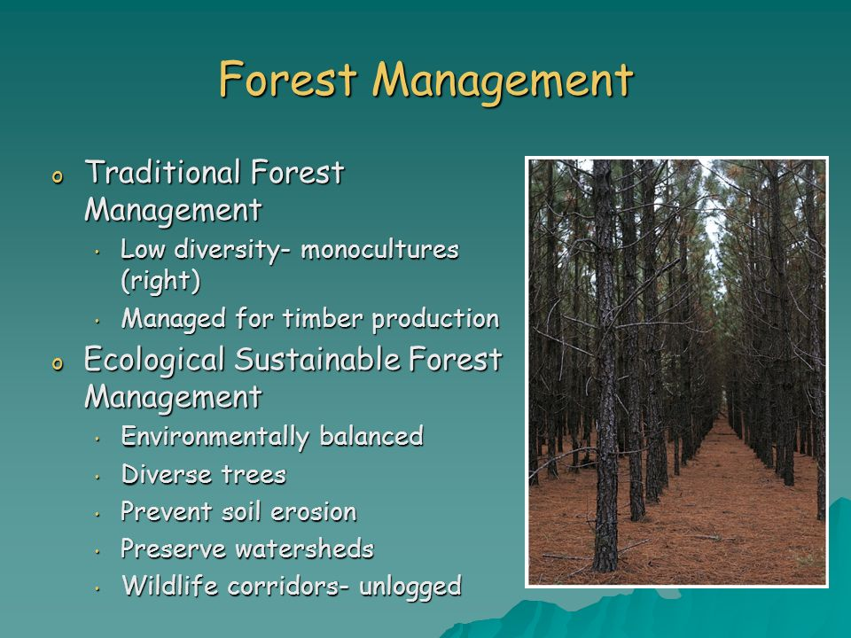 Forest Management Traditional Forest Management