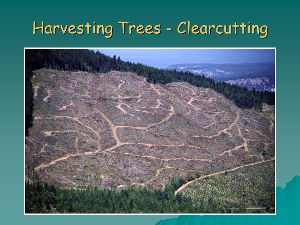 Harvesting Trees - Clearcutting