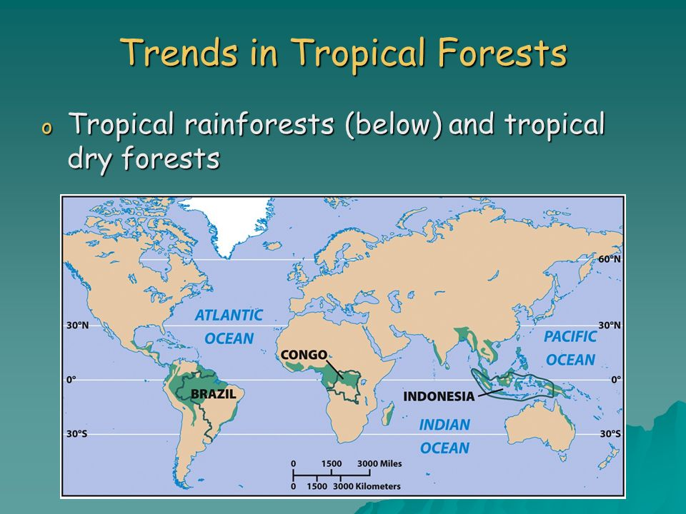 Trends in Tropical Forests