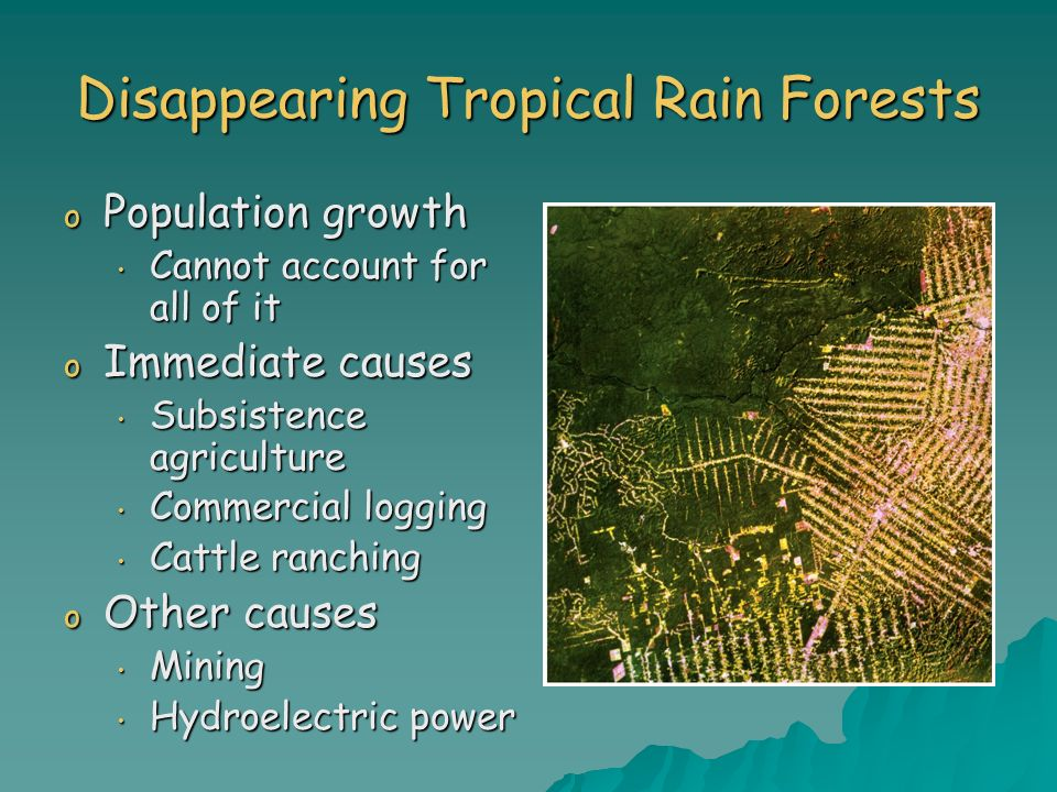 Disappearing Tropical Rain Forests