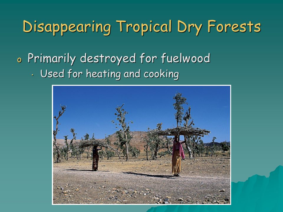 Disappearing Tropical Dry Forests