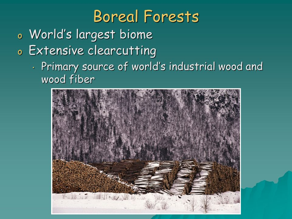 Boreal Forests World's largest biome Extensive clearcutting