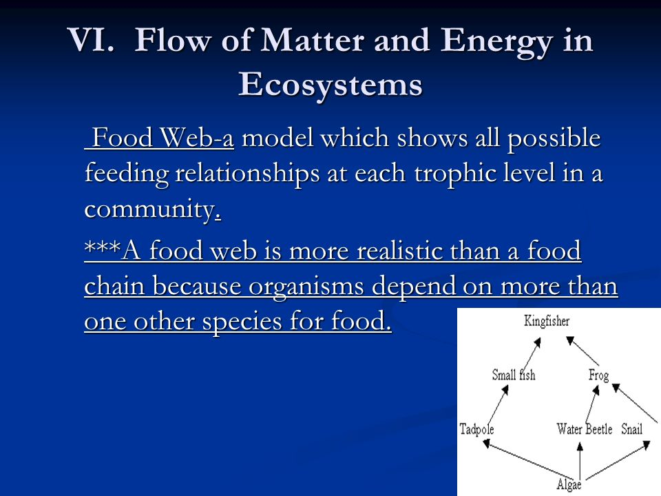 VI. Flow of Matter and Energy in Ecosystems