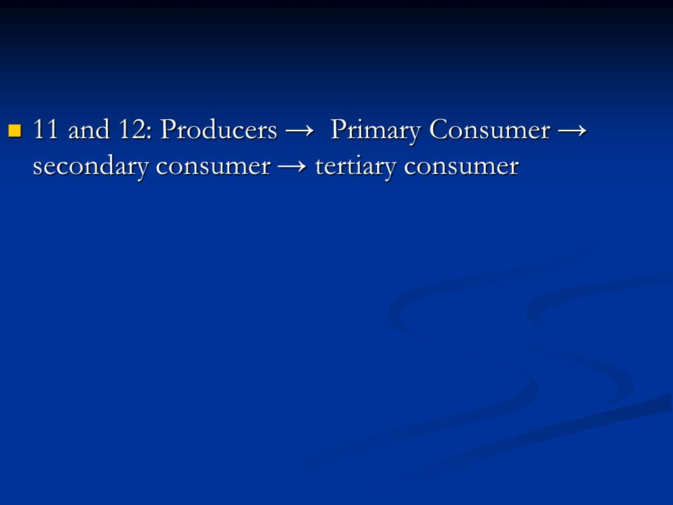 11 and 12: Producers → Primary Consumer → secondary consumer → tertiary consumer