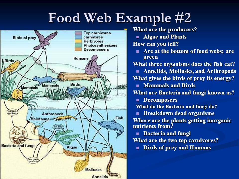 Food Web Example #2 What are the producers Algae and Plants