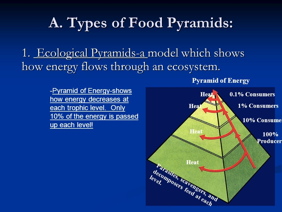 A. Types of Food Pyramids: