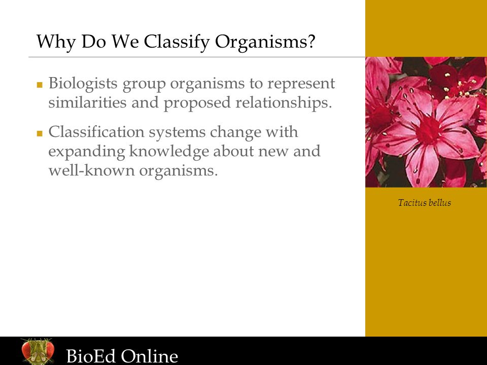 Why Do We Classify Organisms