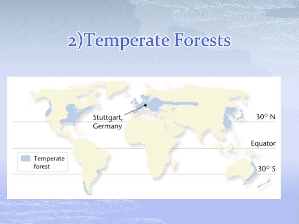 2)Temperate Forests