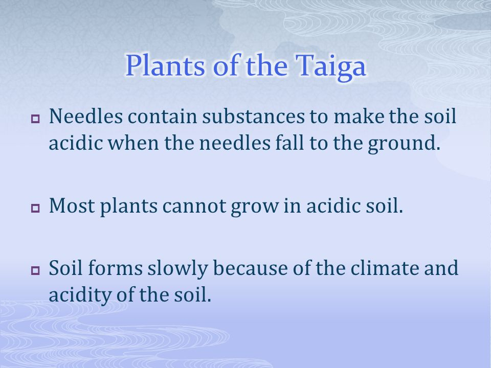 Plants of the Taiga Needles contain substances to make the soil acidic when the needles fall to the ground.