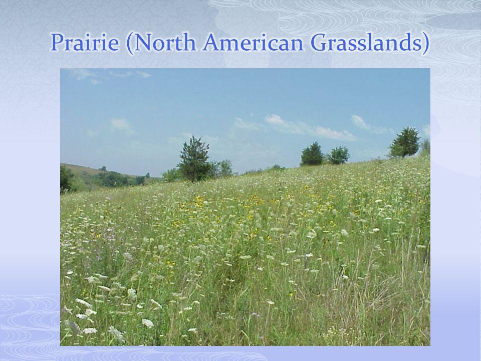 Prairie (North American Grasslands)