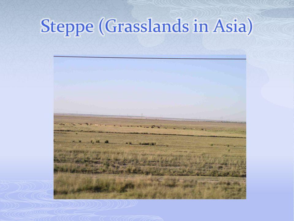 Steppe (Grasslands in Asia)