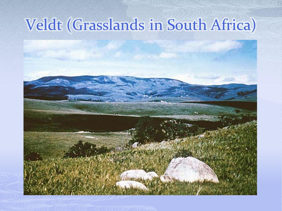 Veldt (Grasslands in South Africa)