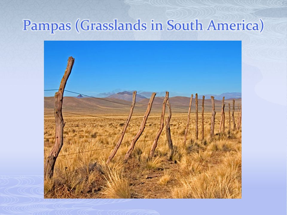 Pampas (Grasslands in South America)