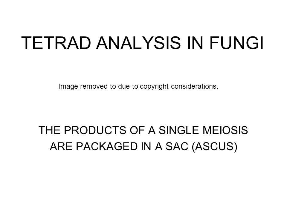 TETRAD ANALYSIS IN FUNGI