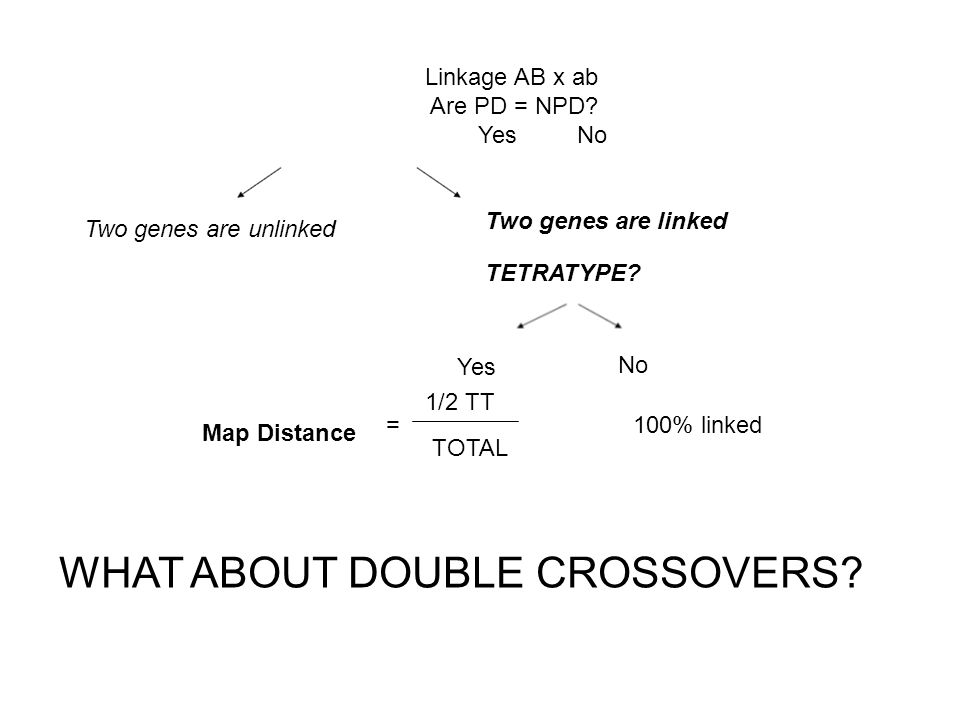 WHAT ABOUT DOUBLE CROSSOVERS