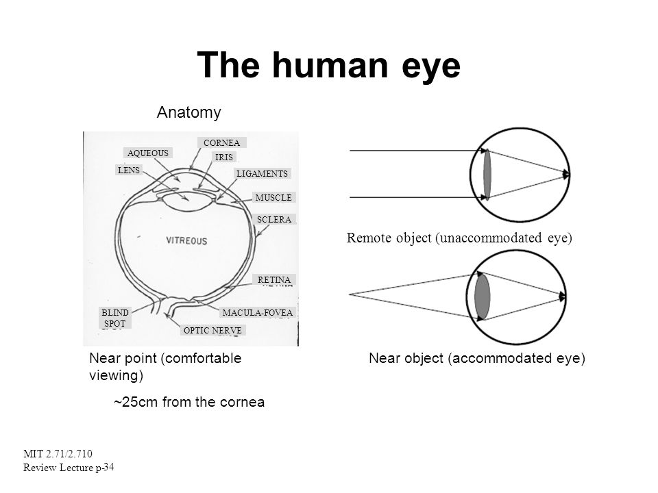 The human eye Anatomy Remote object (unaccommodated eye)