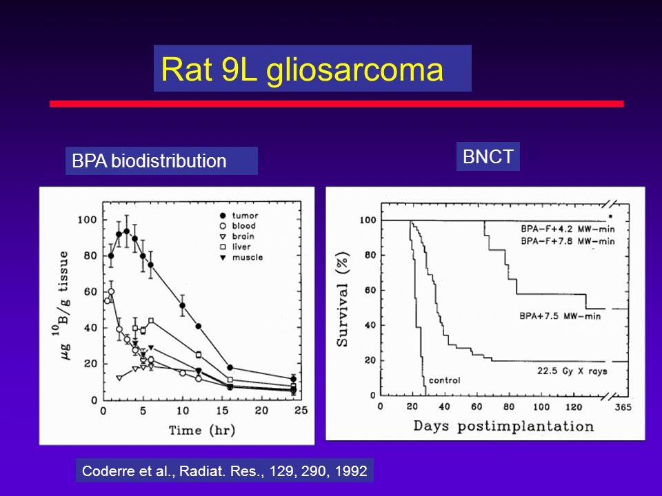Rat 9L gliosarcoma BNCT BPA biodistribution